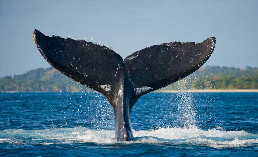 ethereum eth balinalarinin sayisi rekor kirdi