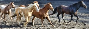 horse 2629042 1920
