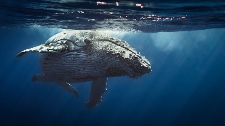 chainlink balinalari 1 45 milyar dolarlik link aldi