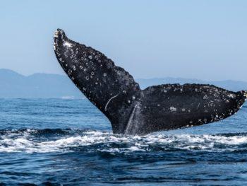 ethereum balinalari buyuk miktarda ekleme yapti 2