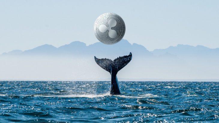 ripple 100 milyon xrpyi transfer etti