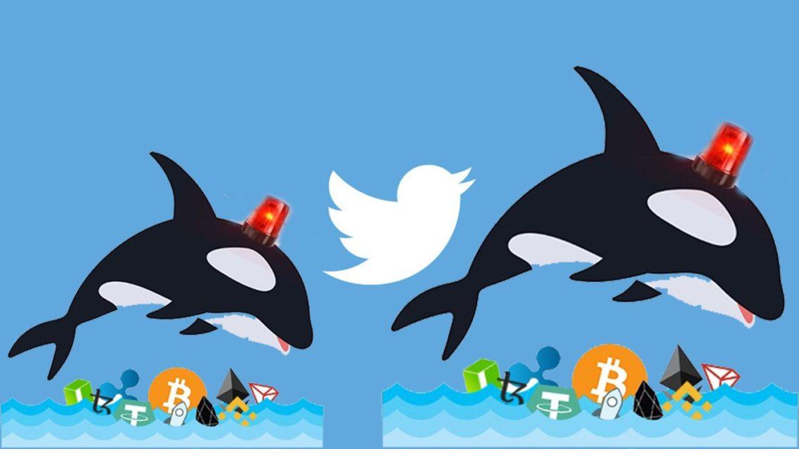 son dakika whale alert twitter hesabi kapanacak mi 1